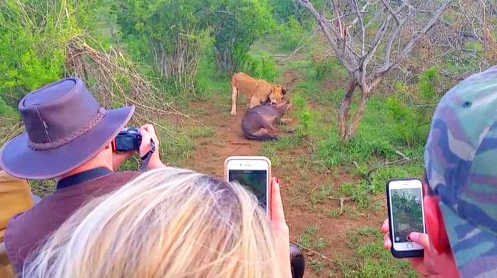 Turistene ble vitne til dødskamp på safari