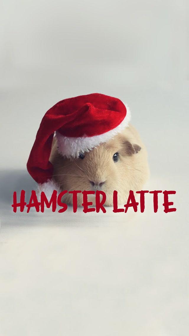 Hamster Latte'nin yılbaşı telaşı