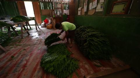 Pequeñas comunidades aprovechan y cuidan principal reserva forestal de Guatemala