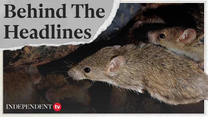 What is causing the Australian mouse plague?