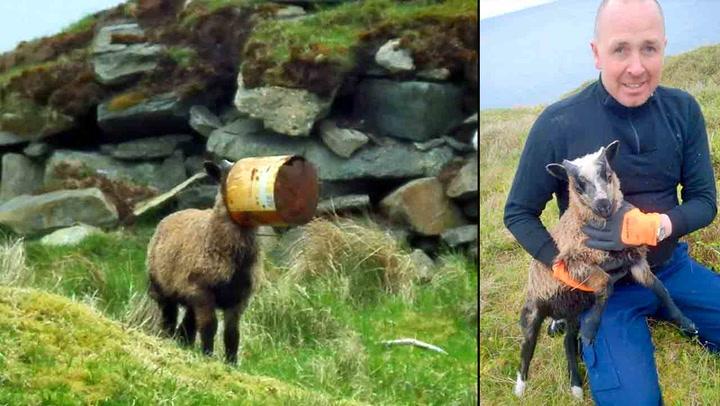 Nordmann reddet nyfødt lam fra den sikre død