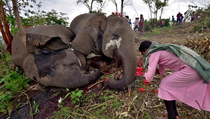 Tormenta fatal o envenamiento? Una manada de elefantes aparece muerta en  extrañas circunstancias   Mundo Deportivo