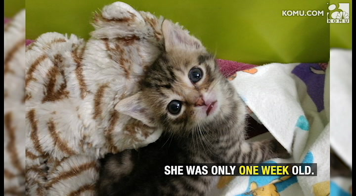 Once cold and abandoned, Molly the miracle kitten awaits a forever home
