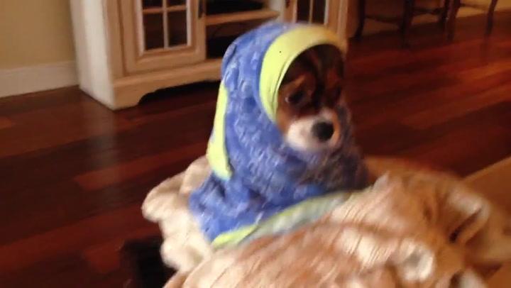Denne hunden hater å bade
