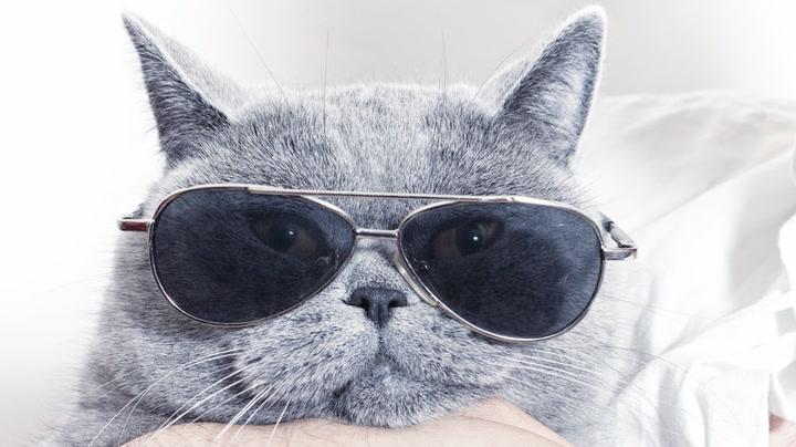 Katten er definitivt det kuleste kjæledyret