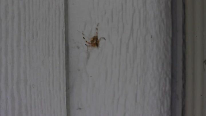 Slik kvitter du deg med en edderkopp