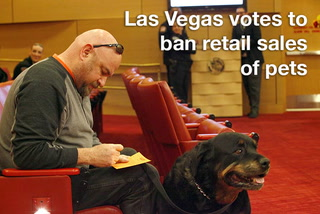 Las Vegas votes to ban retail sales of pets
