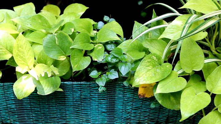 Indoor plants that will help improve air quality