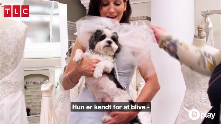 Kom med til et rigtig hunde-'dyrt' bryllup