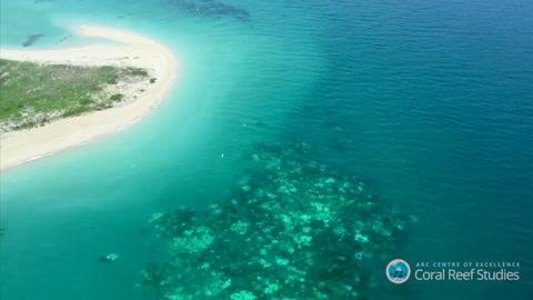 Coral decolorado de la Gran Barrera es