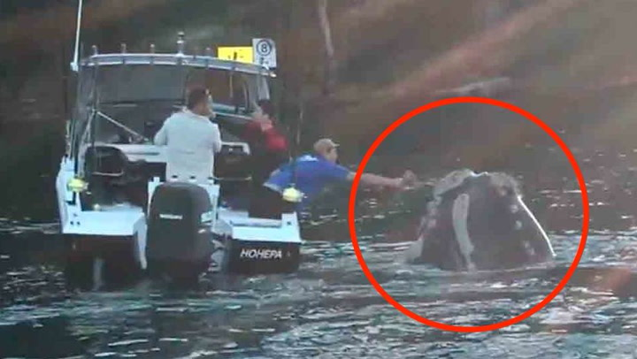 Hvalen ber fiskerne om hjelp