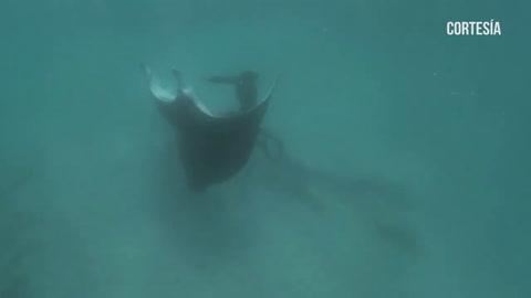 Una enorme mantarraya le pide ayuda a un buzo en Australia