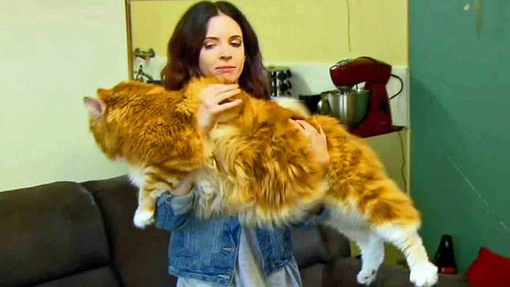 Dette kan være verdens lengste katt