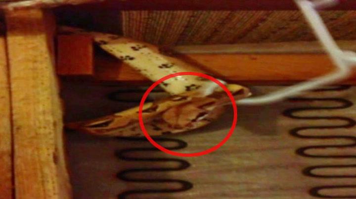 Fant slange i sofaen