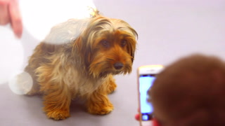 Animal Foundation Preps Pups For Best In Show