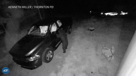 El presunto ladrón de autos… era un oso