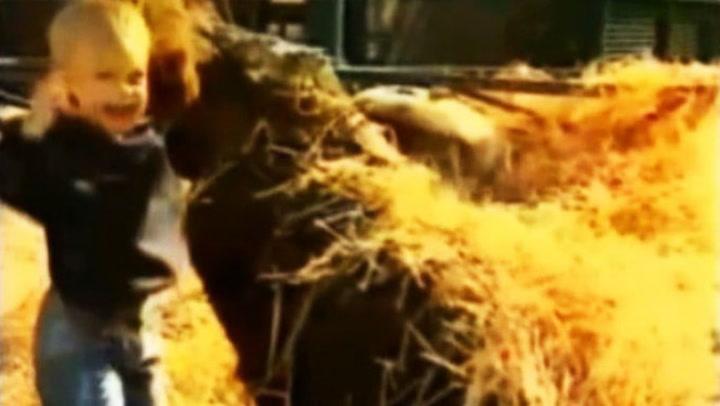100 kilos gorilla leker med baby