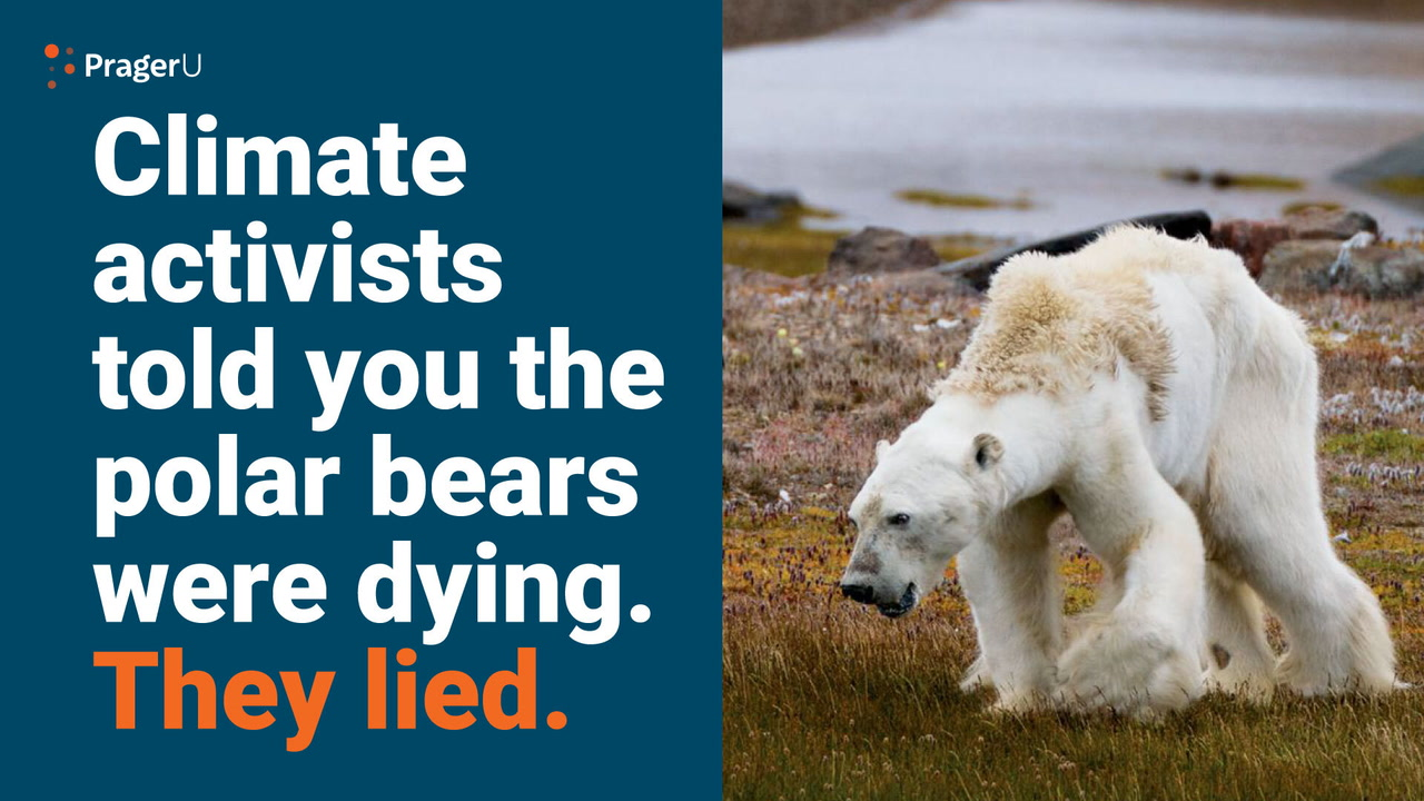 Remember This Starving Polar Bear?
