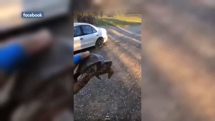 Facebook video shows men shooting box turtle