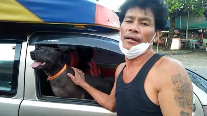 หมาลูกครึ่งพิตบูลแสนรู้ เจ้าของใช้ซื้อของได้ เปิดประตูรถ เปิดกระจกได้