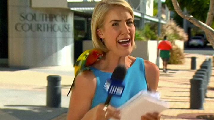 Papegøye skapte panikk for TV-reporter
