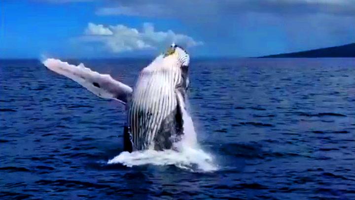 Den innpåslitne hvalen gir turistene en opplevelse for livet