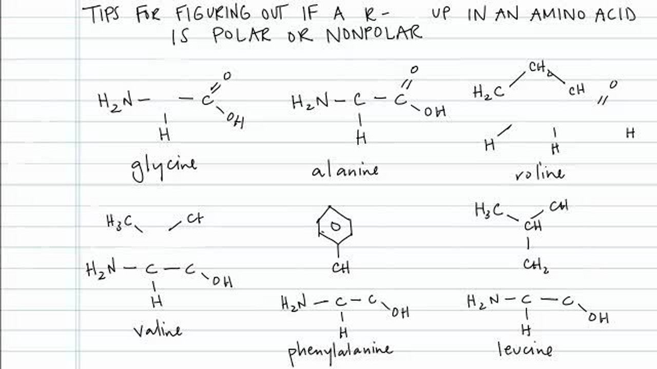 Determining if a r group in an amino acid is polar or nonpolar determining if a r group in an amino acid is polar or nonpolar concept chemistry video by brightstorm altavistaventures Images