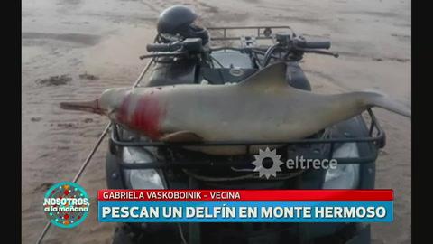 Un pescador mató a un delfín, paseó el cadáver en su cuatri y se lo comió