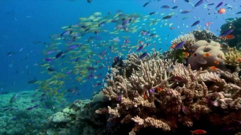 Australia, opuesta a incluir la Gran Barrera de Coral como patrimonio en peligro