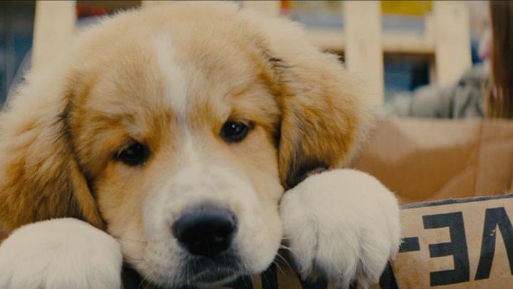 A Dog's Journey Trailer 1