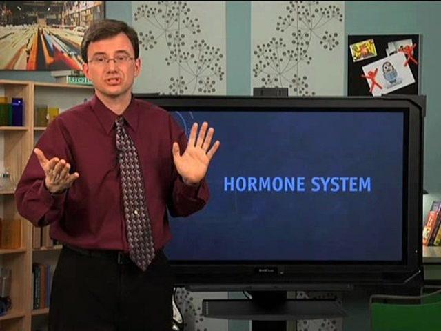 Hormone System
