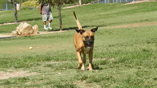 Some of the best dog parks in Las Vegas – VIDEO