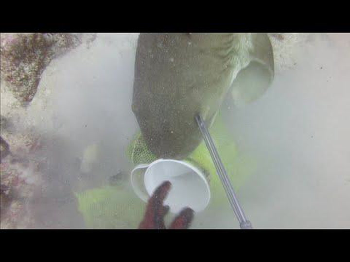 Spearfisher Fights Off A Shark Trying To Steal His Catch