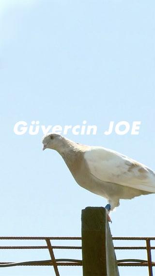 Diplomatik krize yol açan güvercin Joe
