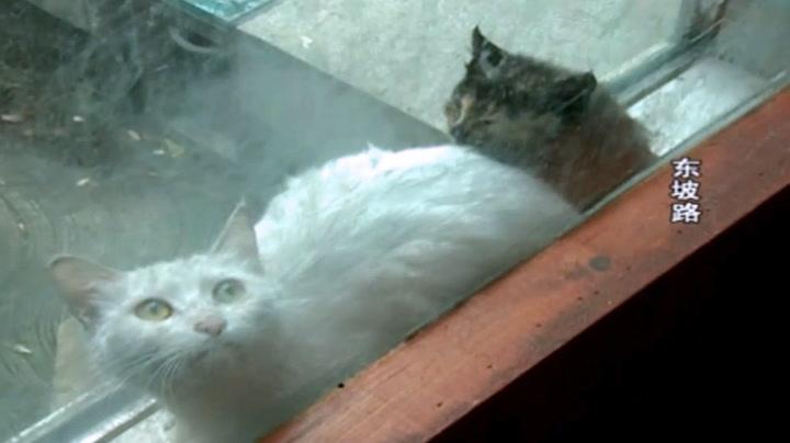 Stakkarslige pusekatter satt fast i vindu