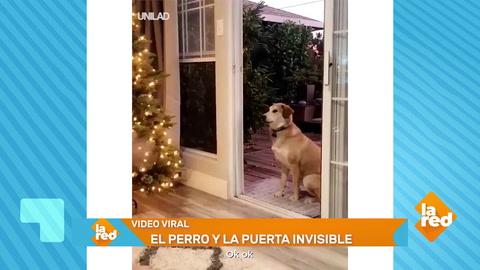 Graban divertido momento de un perro en su casa