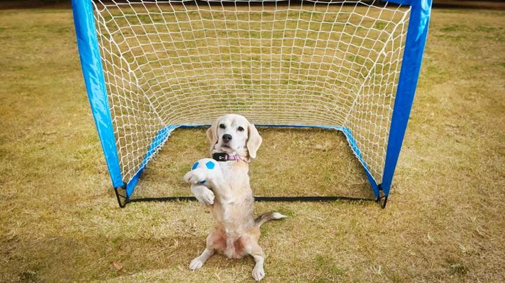 Du slår ikke rekord-hunden Purin!