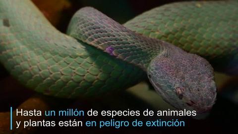 Hasta un millón de especies podrían verse amenazadas, alerta ONU