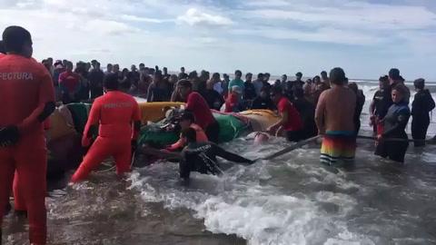 Trabajan contrarreloj para rescatar a una ballena en Mar del Plata