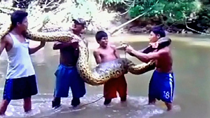 Fant fem meter lang anakonda