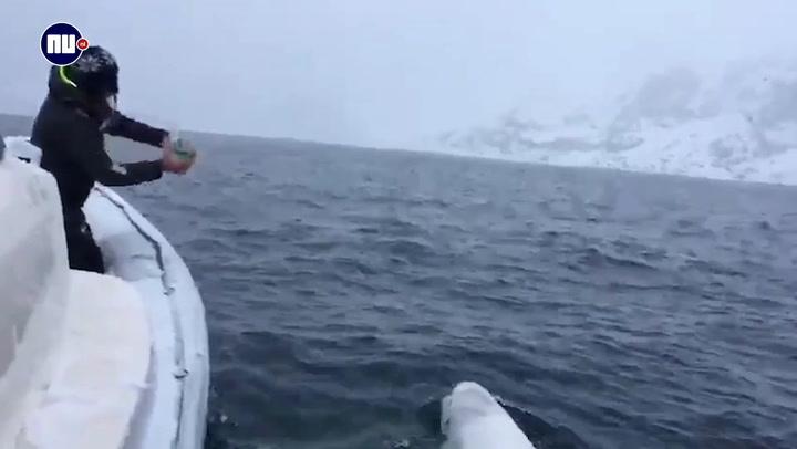 Witte dolfijn brengt bal steeds terug