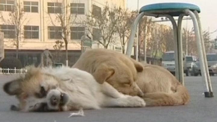 Hunden sørger over tapet av bestevennen