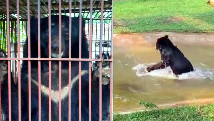 Tuffy ble torturert i årevis – her får han endelig kjenne på friheten