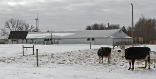 A Green Milking Parlor