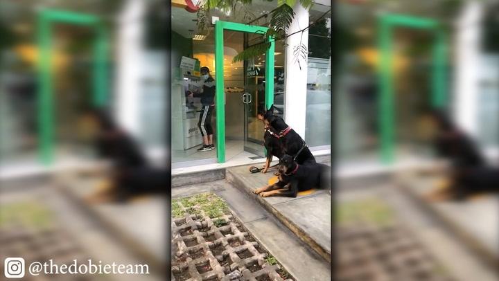 Perros doberman resguardan a su dueña mientras retira dinero de cajero