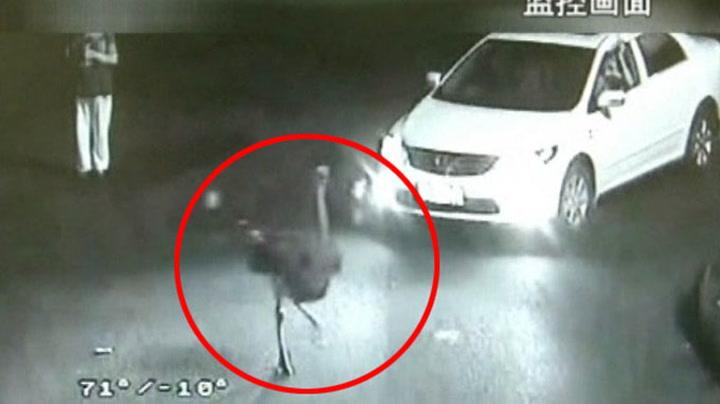 Struts skaper kaos på motorveien