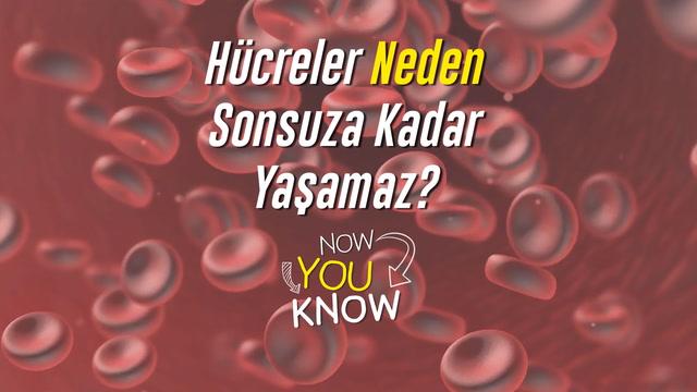 Now You Know - Hücreler neden sonsuza kadar yaşamaz?