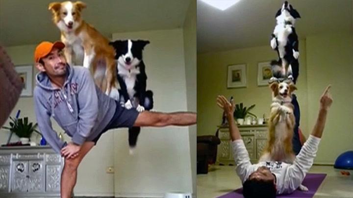 Ta-da! Hunde-akrobatene tar nettet med storm