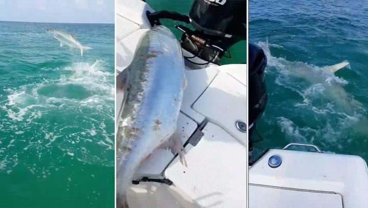 Fisken rømmer fra haien – og opp i båten