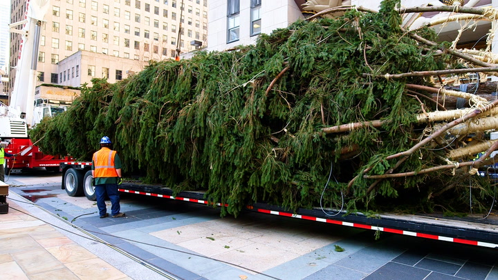 How the 75-foot Rockefeller Christmas tree makes to Manhattan